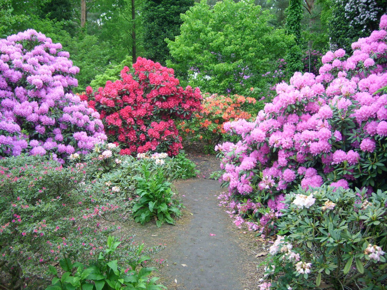 2009 - 05 Rhododendronpark Gristede_9 Kopie